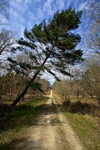 """""""Timber"""" © Derek Fogg - British Landscapes Photography"""