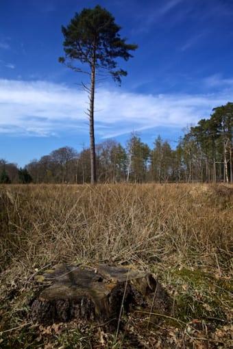 """Lonesome Pine"" © Derek Fogg - British Landscapes Photography"